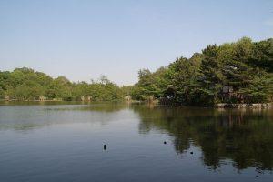 1280px-nerima_syakujii_park_sampoji_pond